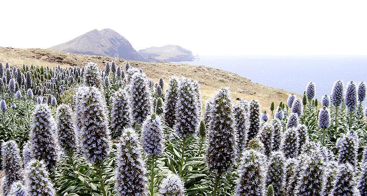 TAMARILLO (Madeira), 10 Tage/9 Nächte, täglich