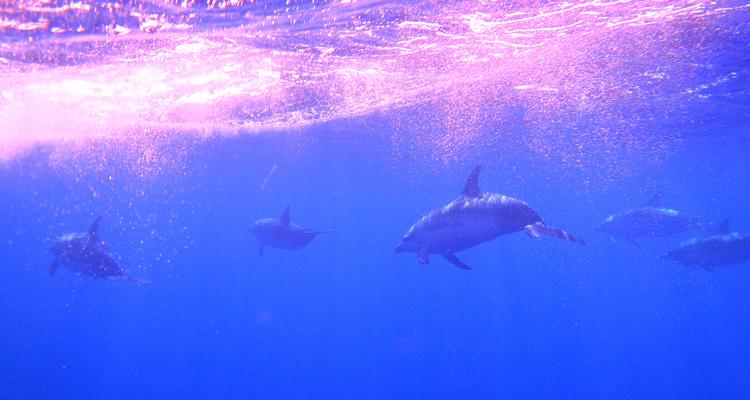 Schwimmen mit Delfinen auf São Miguel, 8 Tage/7 Nächte, täglich